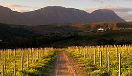 Cap sur les vins d'Afrique du Sud !