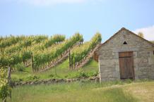 Union des Vignerons de Saint-Pourcain