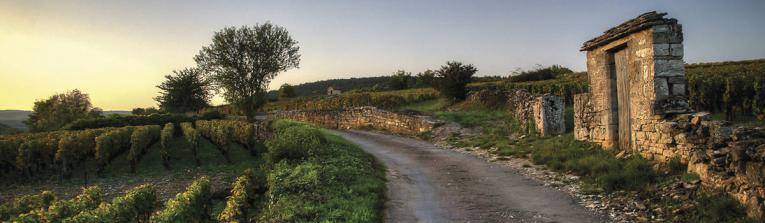 Acheter les vins de Bourgogne, France