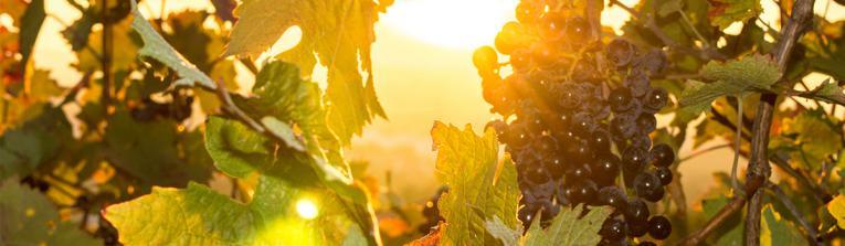Acheter les vins de La Rioja, Argentine