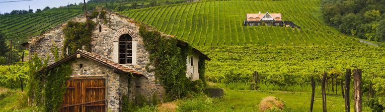 Acheter les vins de Rheingau, Allemagne