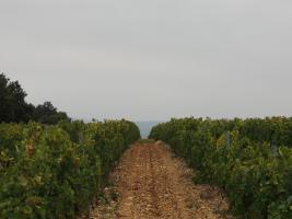 Domaine Saint Roch - Languedoc