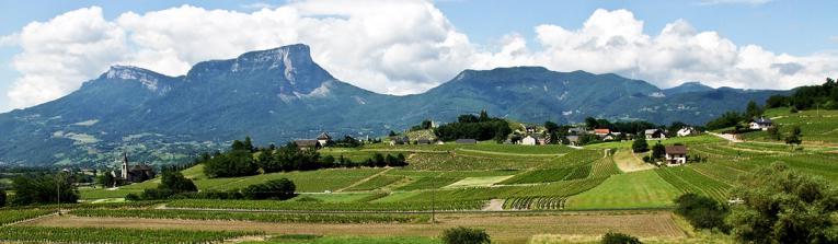 Acheter les vins de Savoie et Bugey, France