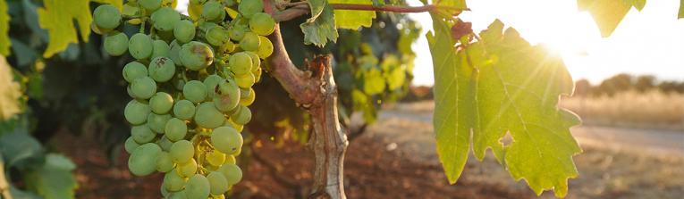 Acheter les vins de Peloponnèse, Grèce
