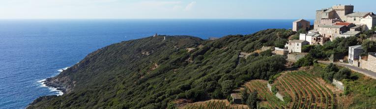 Acheter les vins de Corse, France
