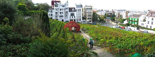 Acheter les vins de Île de France, France