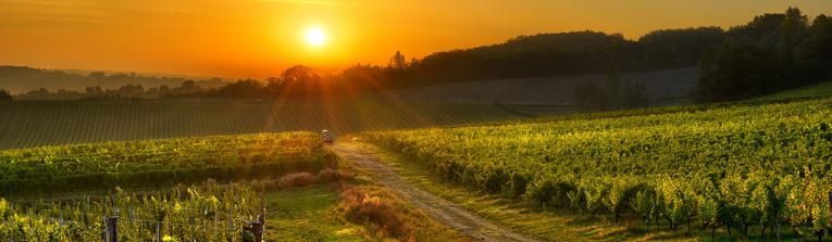 Acheter les vins de Sud-Ouest, France