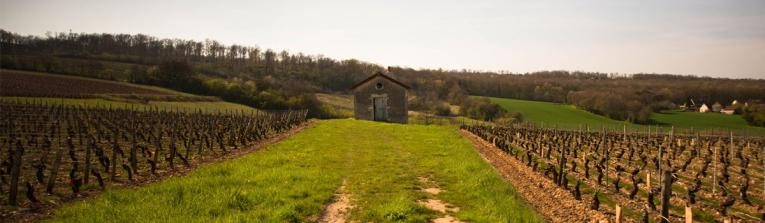 Acheter les vins de Beaujolais et Lyonnais, France