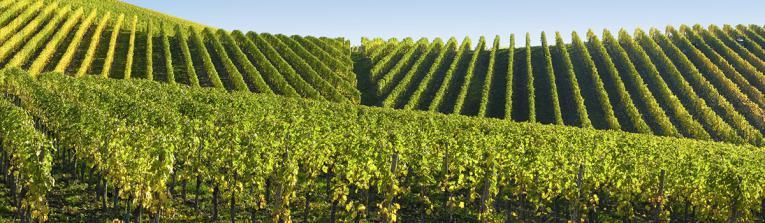 Acheter les vins de Champagne, France