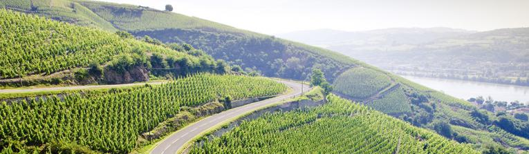 Acheter les vins de Vallée du Rhône, France