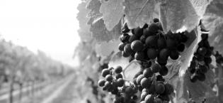 Vignoble du Haut Bagneux - Jean-Christophe Mandard
