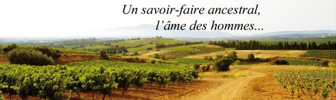 Les Vignobles de Constance & Terrassous