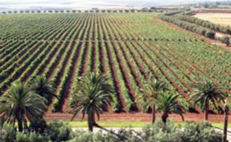 Acheter les vins de Meknès-Tafilalet, Maroc
