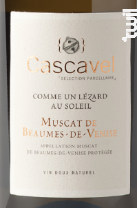 Cascavel Comme un Lézard au Soleil - Caravinsérail - La Maison de Cascavel - 2020 - Blanc