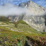 couverture les plus beaux vignobles du monde