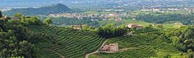 Acheter des vins de l'ancien monde